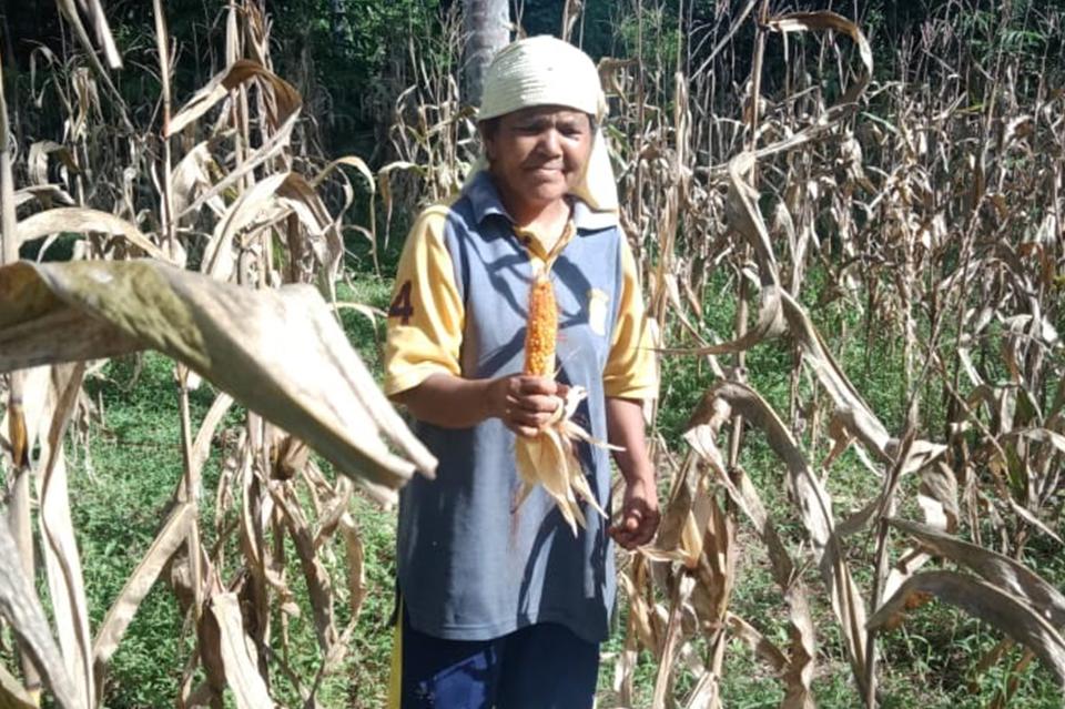 Penerima Manfaat Kampung Jagung DD Singgalang Panen Ditengah Kondisi Pandemi