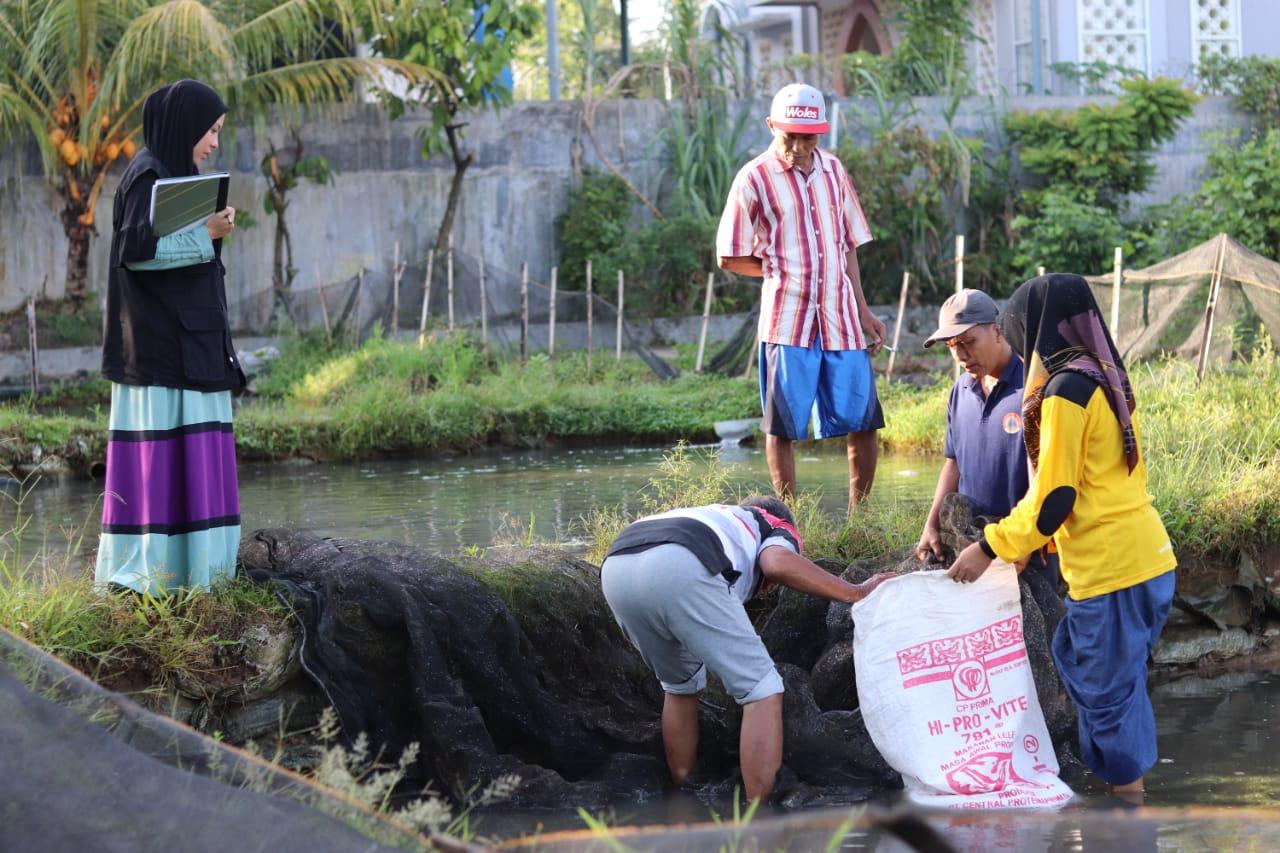 Kelompok Budidaya Ikan Nila Jaya Berkah  Laksanakan Panen Perdana