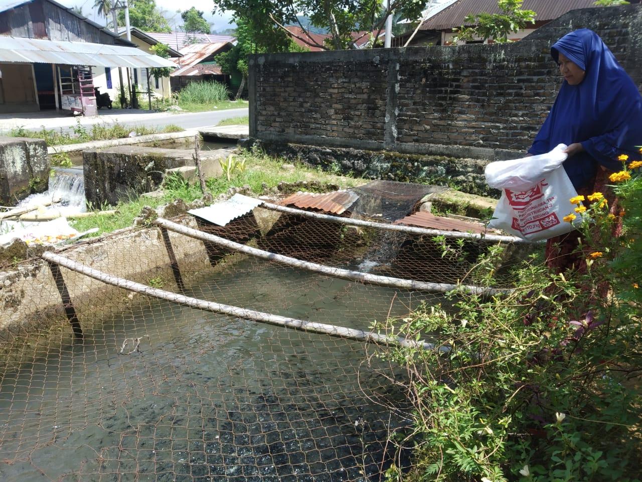 93.000 Bibit Nila Kembali di Tebar  Jelang Panen Awal Maret 2021